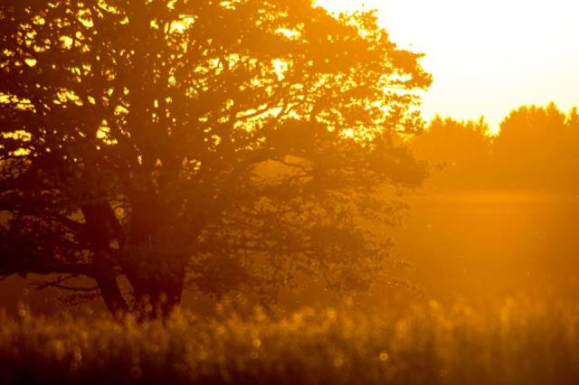 radiance of evening